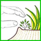 How do you care for & maintain a food garden? Weeding.