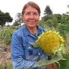Vegetable Gardens, Community Gardens: Gardener presenting a sunflower from her harvest.
