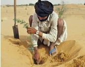 Man in desert planting a tree